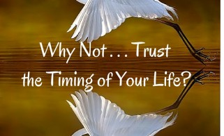 Why Not . . . Trust the Timing of Your Life?